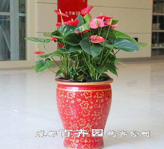 组合盆栽植物