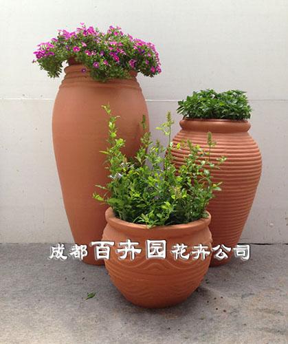 成都百卉园花卉租赁公司提供专用于植物租赁,植物租摆,盆栽花卉