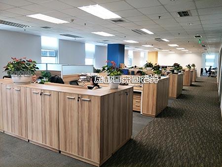 成都办公室花卉绿植租摆案例与设计方案