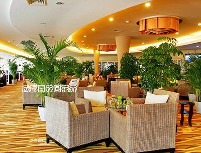 酒店植物租摆