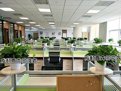 银行办公室盆栽植物出租