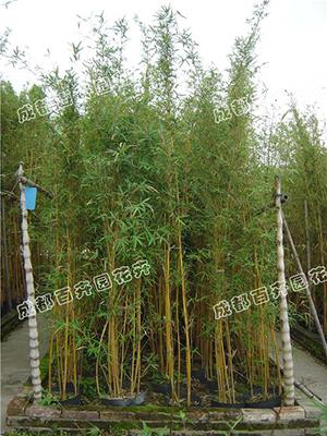 成都庭院花园绿化设计(琴丝竹)