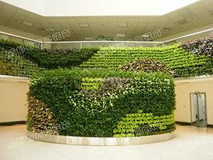 成都植物墙装饰设计
