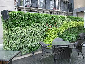 室外植物墙设计