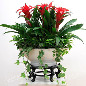 成都植物租赁(组合花卉)