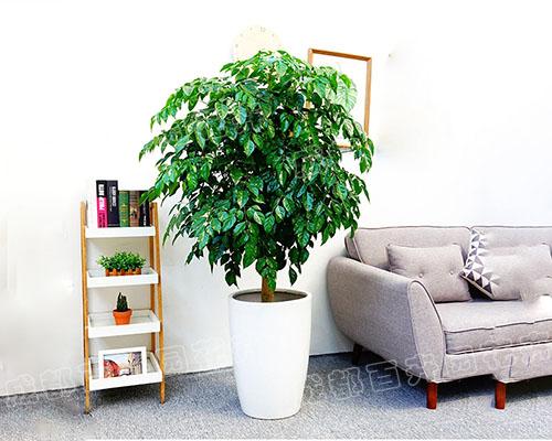 成都花卉租赁(绿宝)