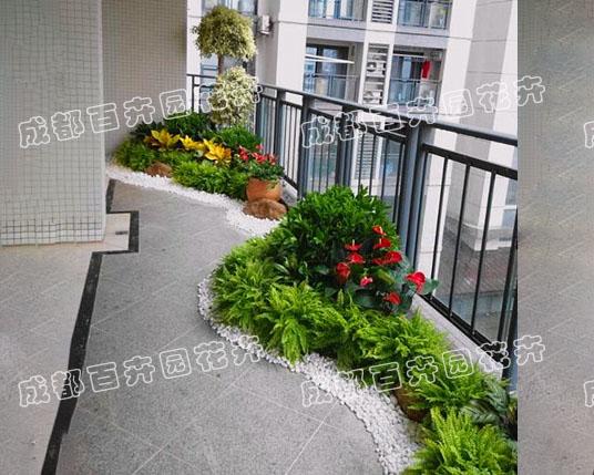 成都办公室租植物(花卉绿植组合造景)