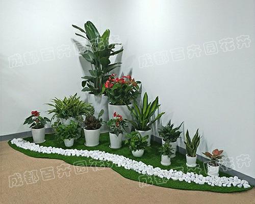 成都盆栽租赁(花卉绿植组合造景)