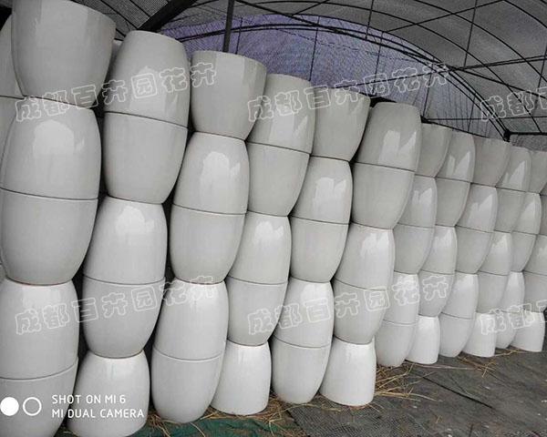 成都植物租赁:高档光面陶瓷花盆