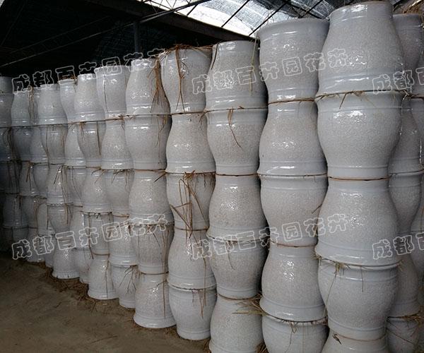 成都绿植租赁:陶瓷花盆