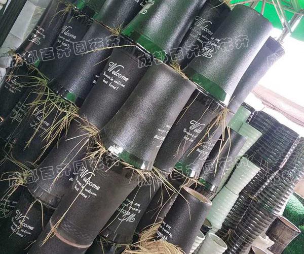 成都绿植租摆:高档陶瓷花盆