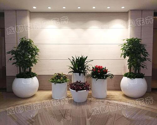 成都花卉植物租摆|办公室花卉绿植组合