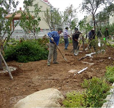 某工厂绿地绿化植物栽种施工案例