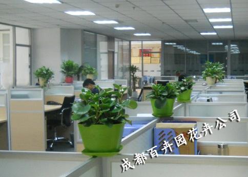 总经理办公室和接待室进行高档植物花卉
